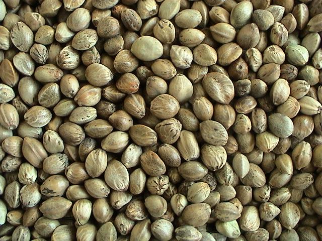 Hemp Seeds Large